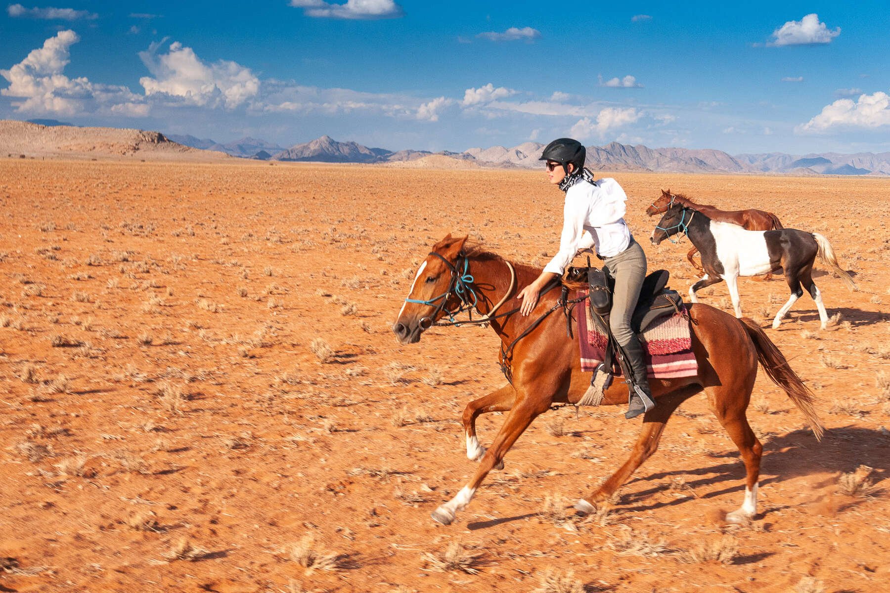Cantering horse on an adventurous trail riding holiday