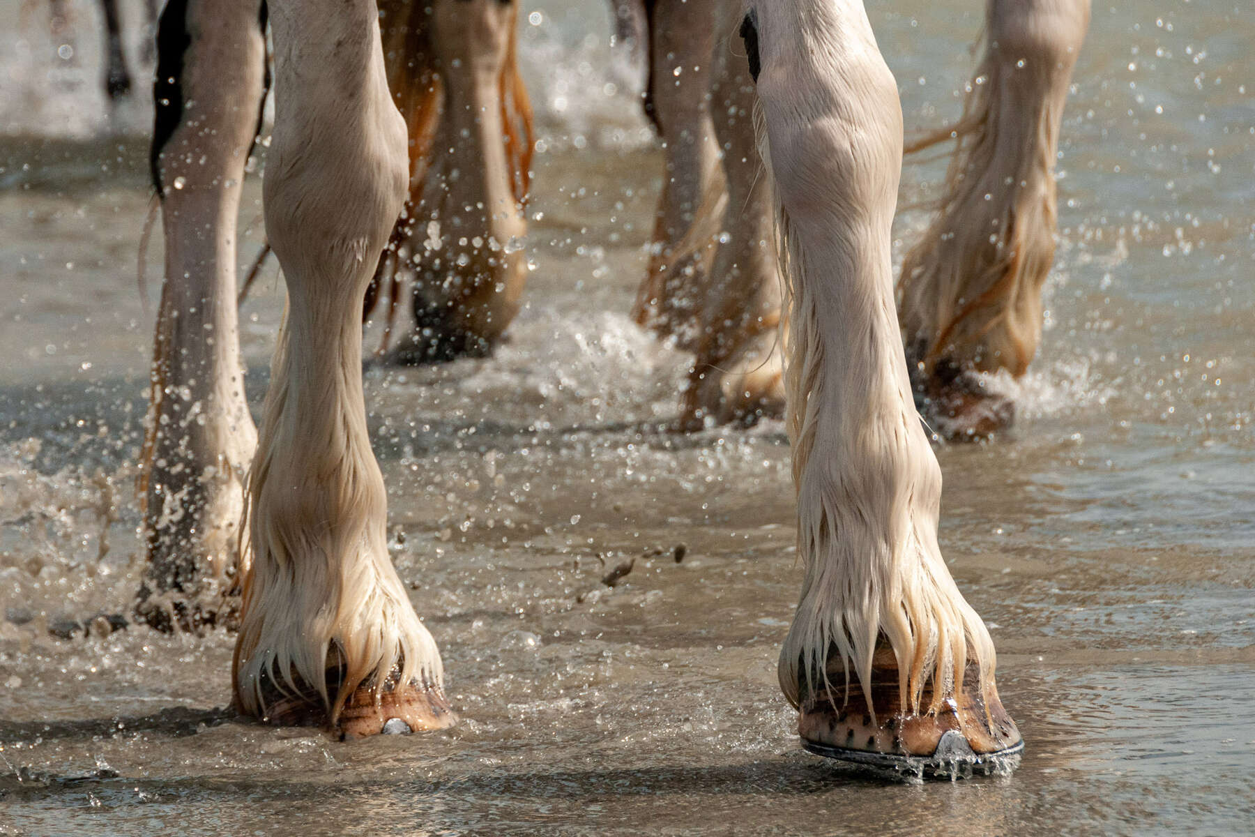 Horse hooves in the sand