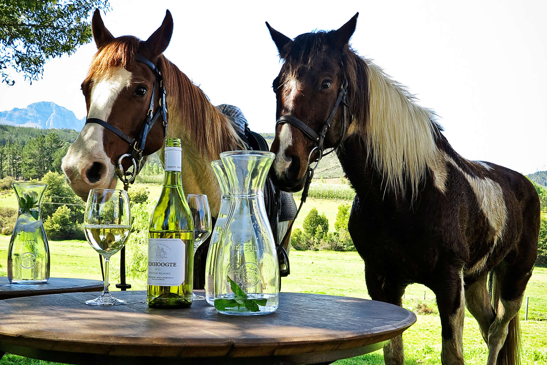 Horses and wine in the Winelands