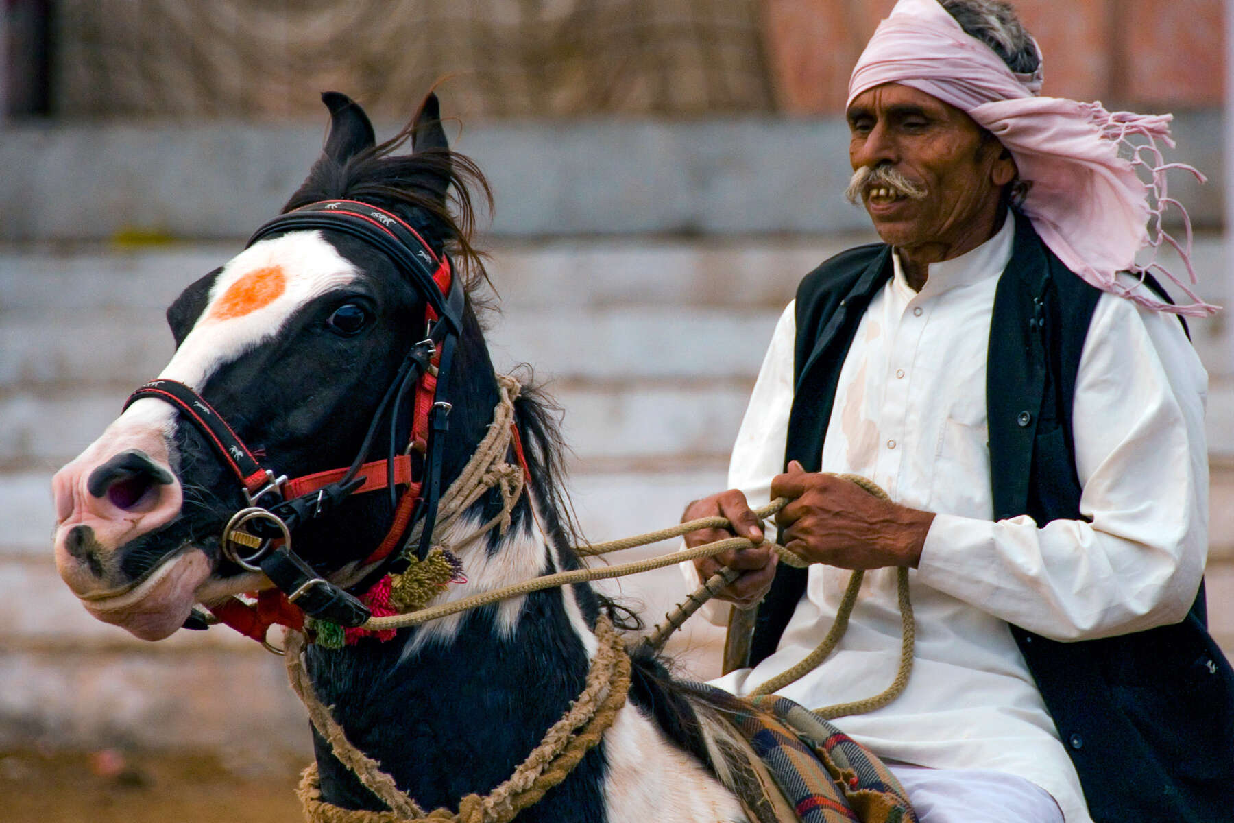 Rider and Marwari horse, Rajasthan