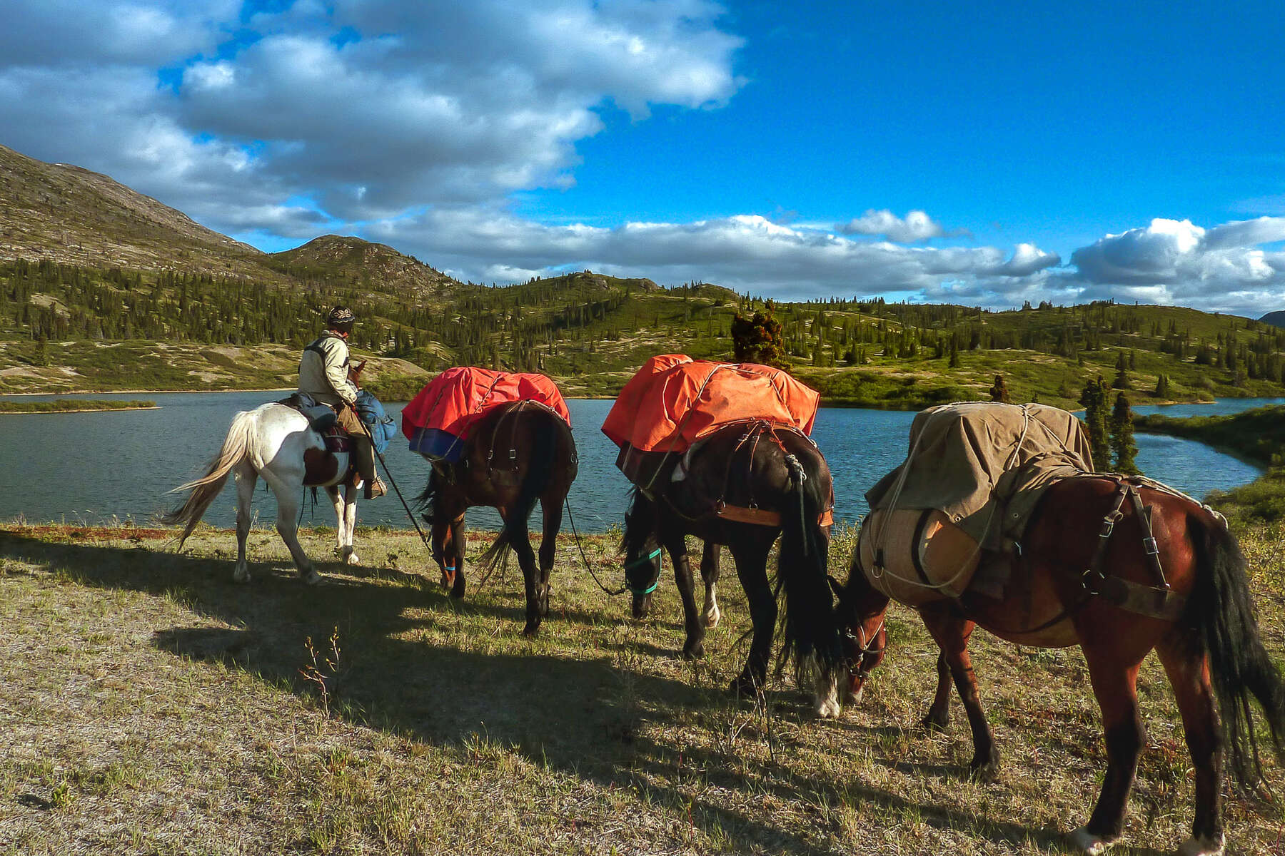 Rider and pack horses in Yukon, Canada