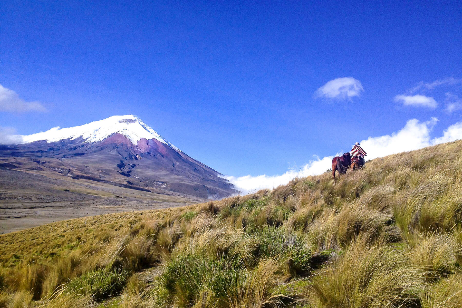 Rider riding to the Cotopaxi in Ecuador, avenue of the Volcanoes
