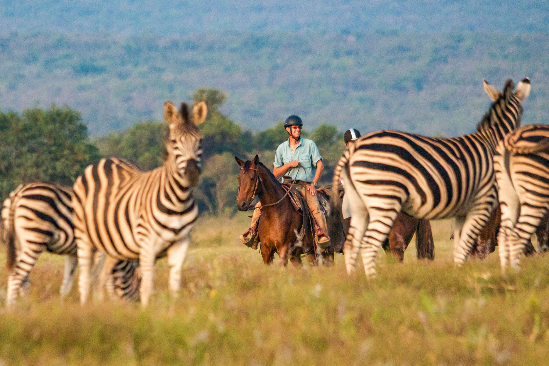 Rider watching zebra from horseback on safari
