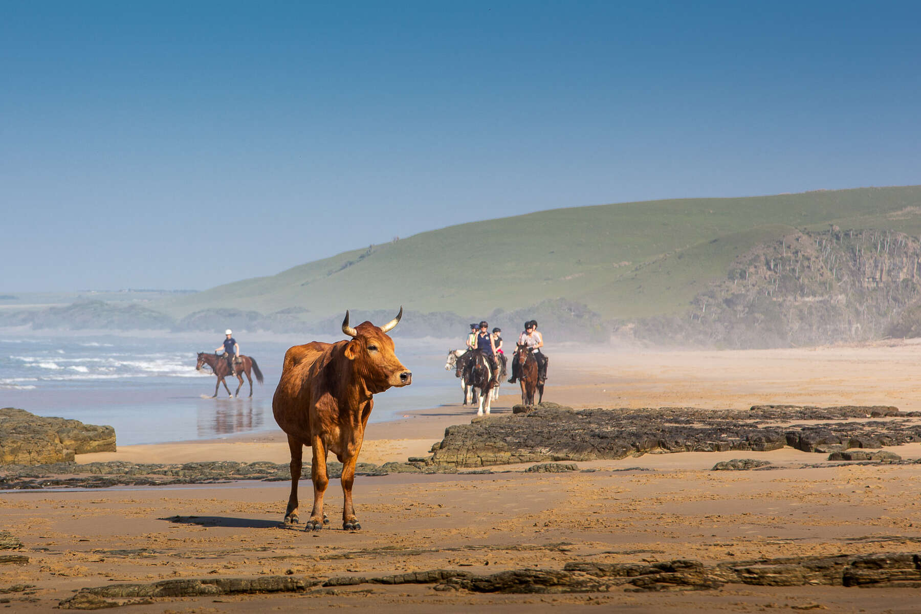 Riders and cows along the Wild Coast