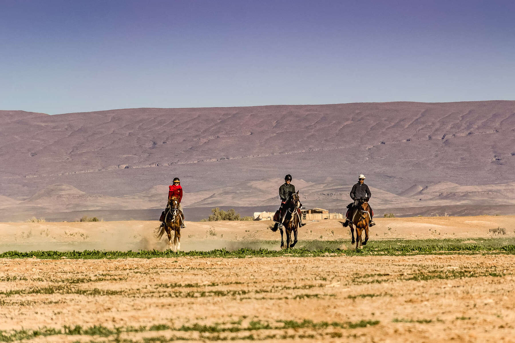 Riders cantering in a green part of the Sahara