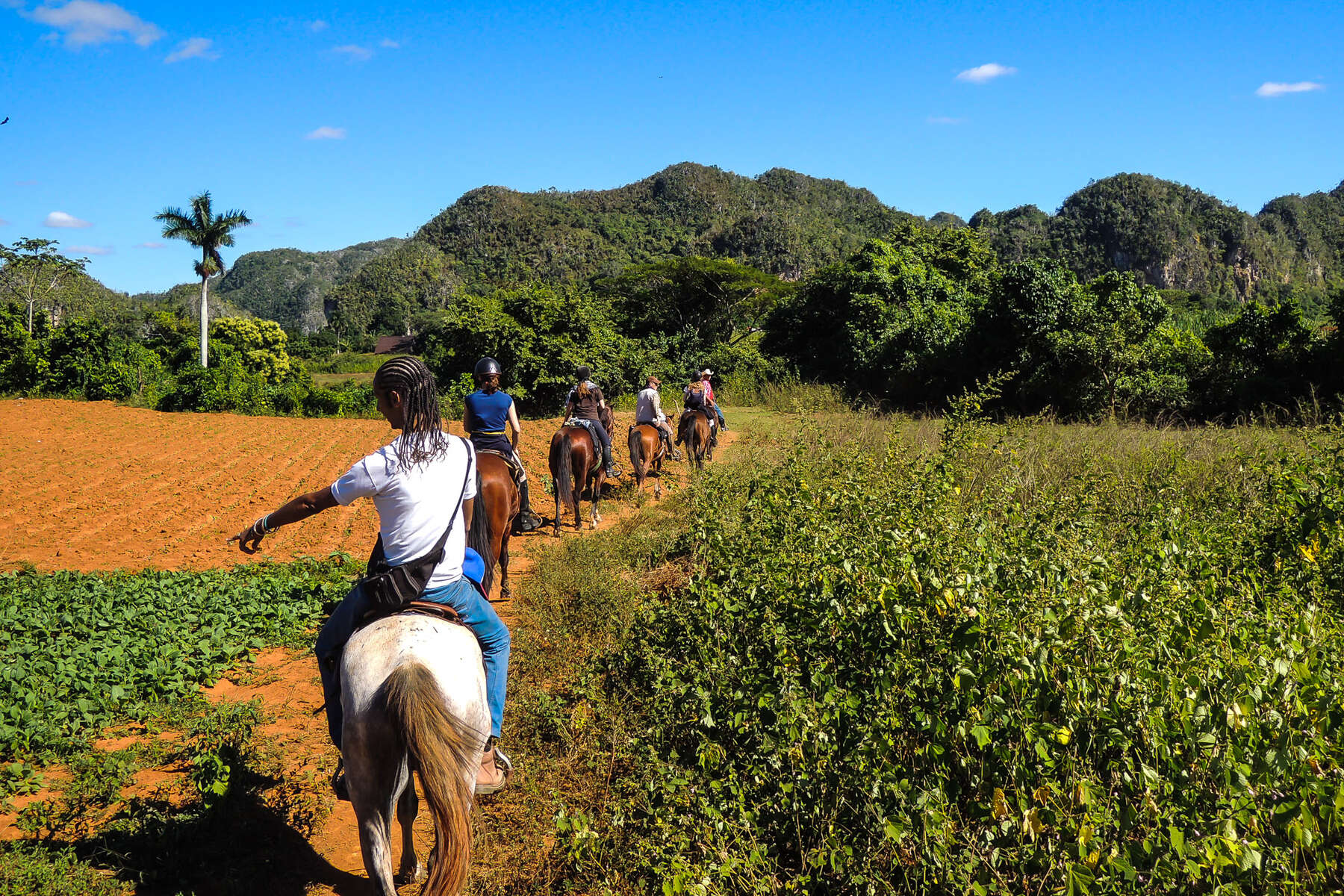 Riders riding through plantations in Cuba.