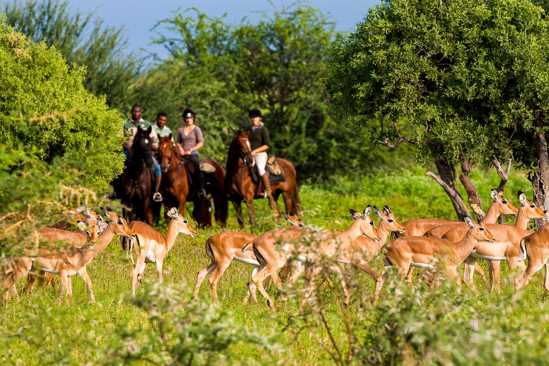 Riders watching impala in Botswana