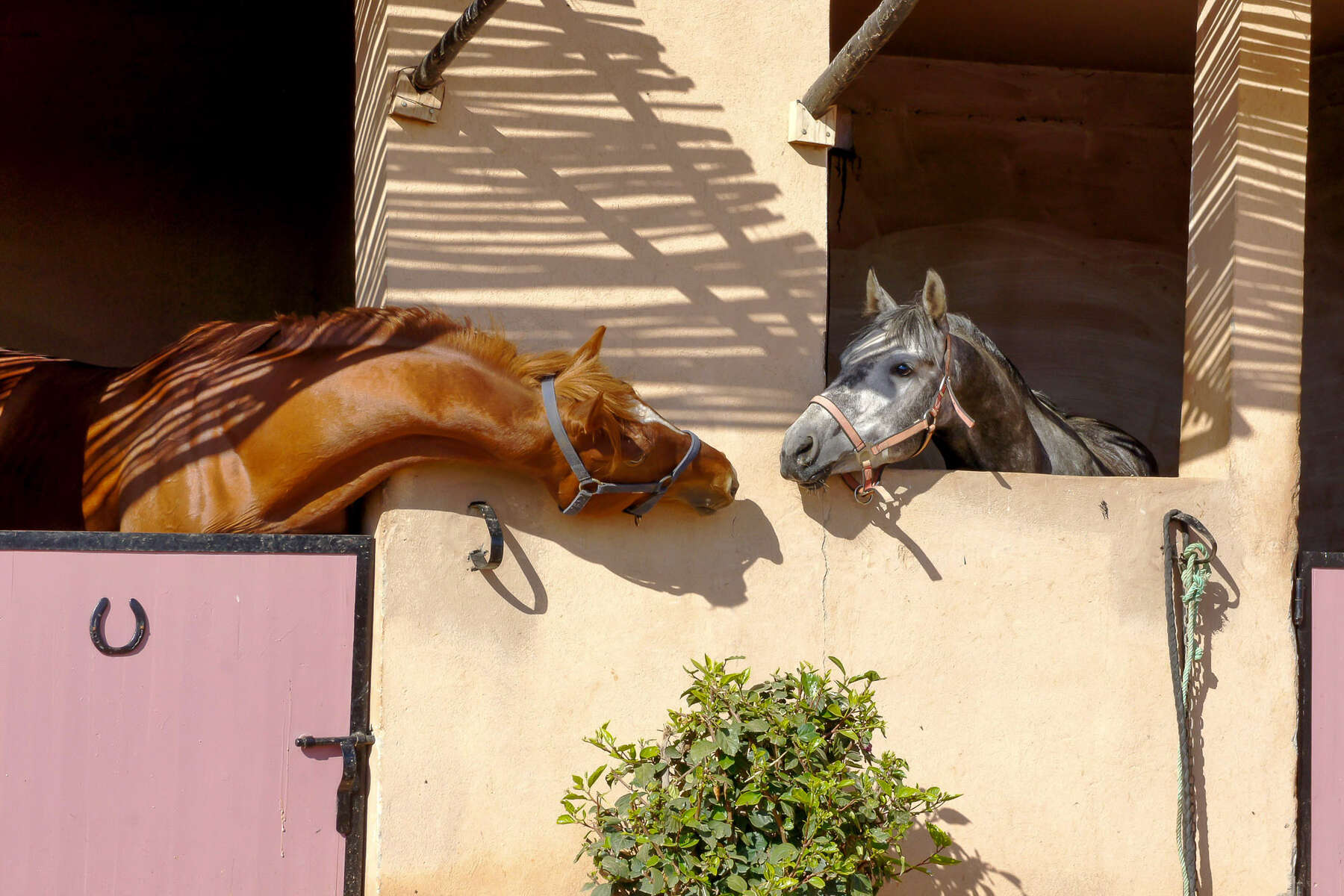 Two horses at Ranch les Gazelles