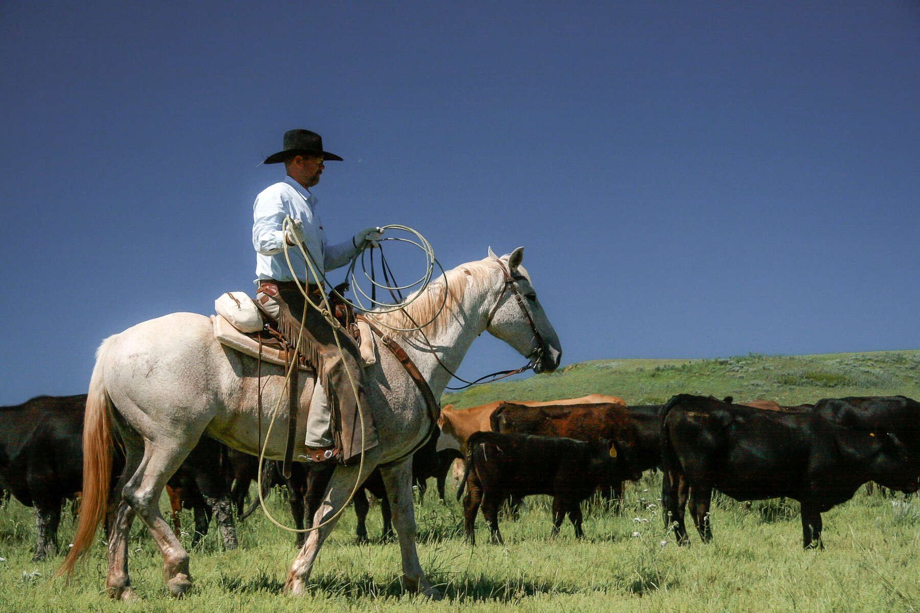 USA Ranch vacation and a wrangler roping cattle