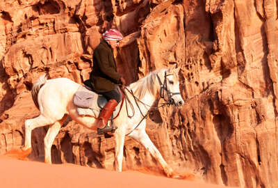 Arabian horse in the Wadi Rum desert