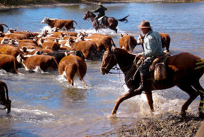 Argentina and cattle drive