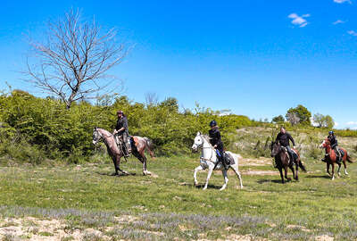 Cantering in the Bulgarian countryside