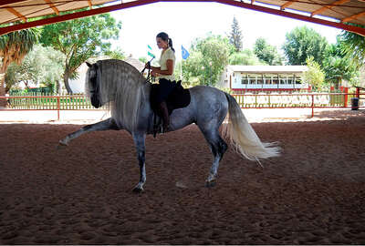 Classical dressage training in Andalusia