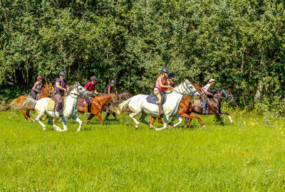 Group of riders cantering across the Puszta Plains