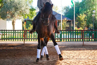 Horse performing dressage moves on a dressage horseback holiday in Spain