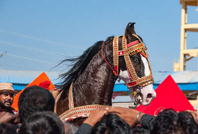 horseback trail in Pushkar fair