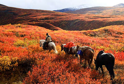 Horseback trail riding expedition  through the Yukon