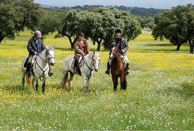 Horses in flowered prairies, Portugal