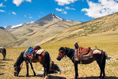 Horses in Ladakh - The Little Tibet.