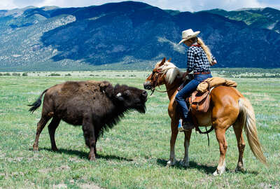 Rider on horseback close to bison in Colorado