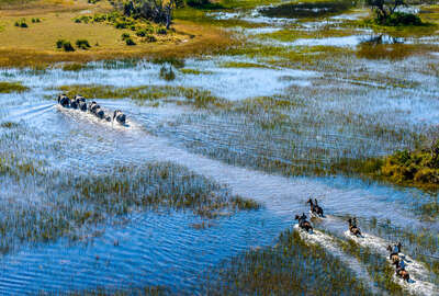 Riders after elephants in the Okavango, Botswana