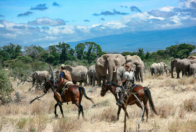 The big five on a horesback safari in Tanzania
