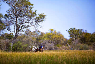 Tracking wildlife on horseback in the Moremi Game reserve