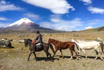 Trail guide leading horses on a trail riding expedition in Ecuador