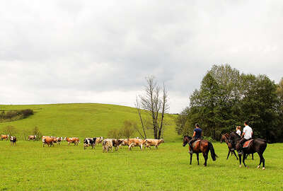 Trail ride through the Croatian countryside
