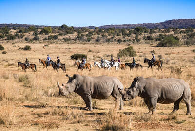 Watching rhino from the saddle on a riding safari in South Africa