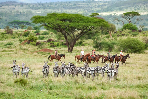 A herd of zebras with horseback riders in the background
