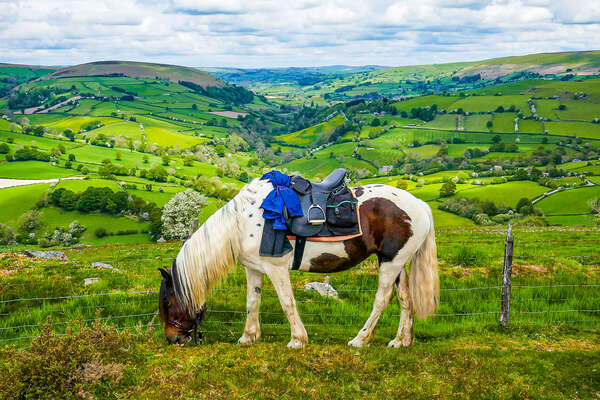 A horse in front of green rolling hills
