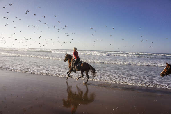A rider cantering on the beach