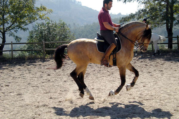 Alcainca dressage, portugal