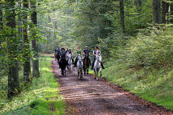 Alsace riding trail