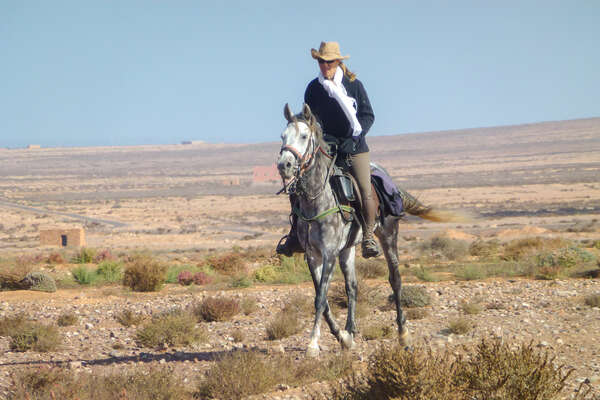 An arabian horse on a horseback holiday in Morocco