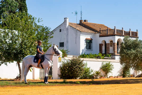 Andalucian horse and his rider at EPona dressage centre in Spain