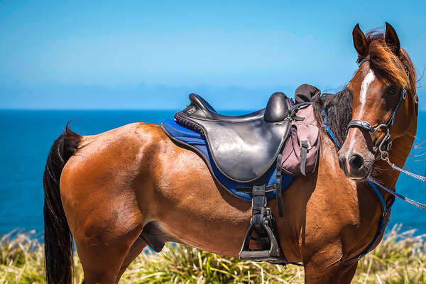 Arabian horse and endurance saddle seen during a trail riding holiday in Australia