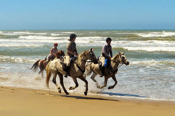 Beach riding trail and safari in South Africa