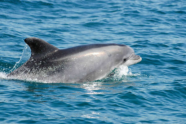 boat trip to discover the dolphins in Portugal