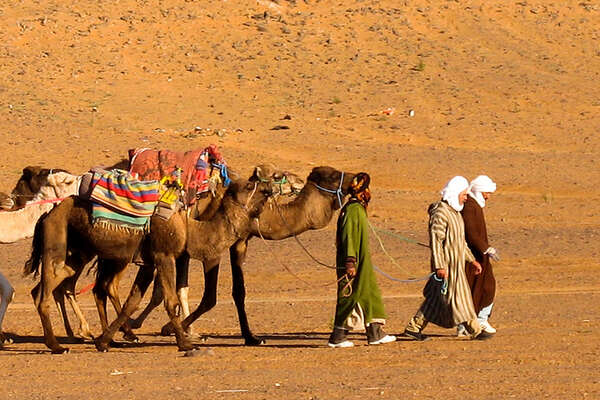 Camel and locals in Morocco