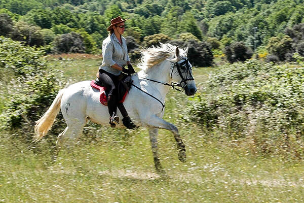 Canter in gredos Mountains