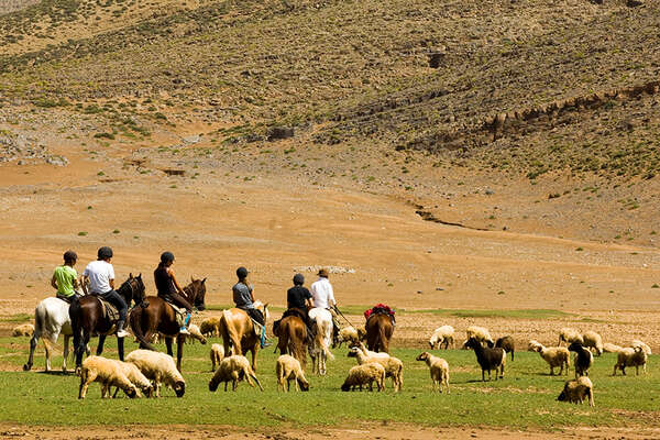 Cattle and horses in High Atlas moutain