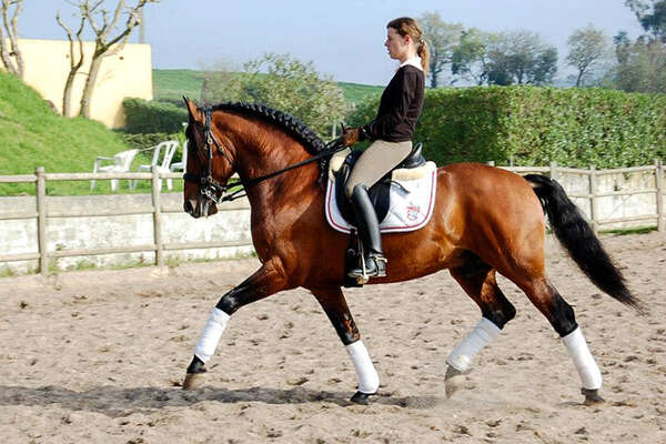Classical dressage in Portugal