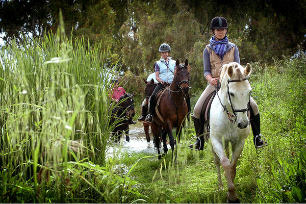 Classical dressage training and trails in Andalusia