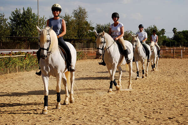 Classical dressage training in Andalucia
