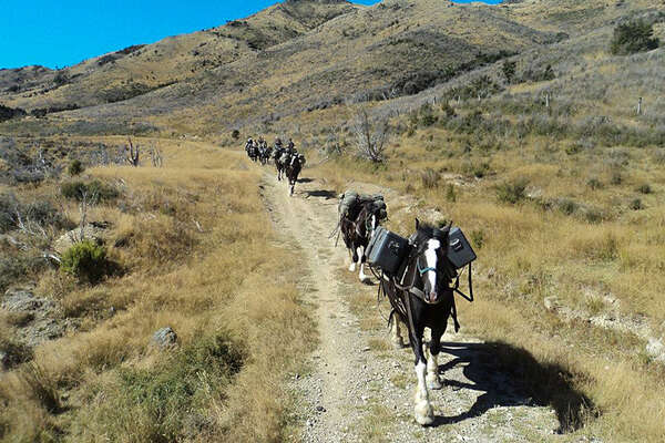 Clydesdale horses trail ride in New Zealand with Equus Journeys