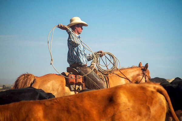 Cow-boy working with a lasso
