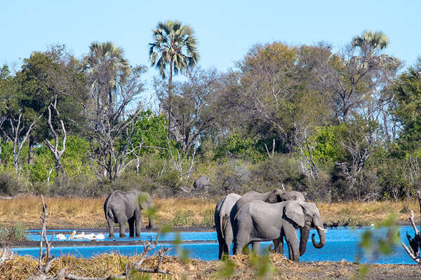 Discover the African wildlife from the saddle