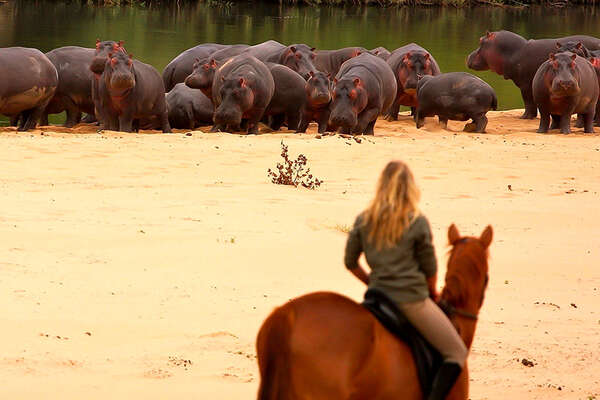 Discover the African wildlife on a riding holiday